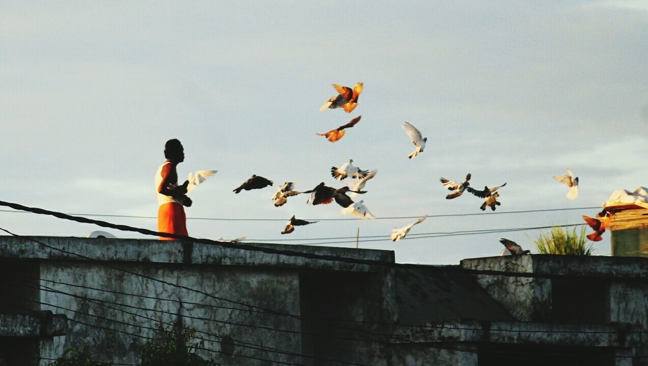 Kabootarbaaji Race Flyingrace Sunset Lastrays Bird Man And Pet Birds Birds In Flight Flying Onarandomday Man And City Slumsky Birdpeople Outdoors Animal Wildlife Sky Animals In The Wild Animal Themes One Person