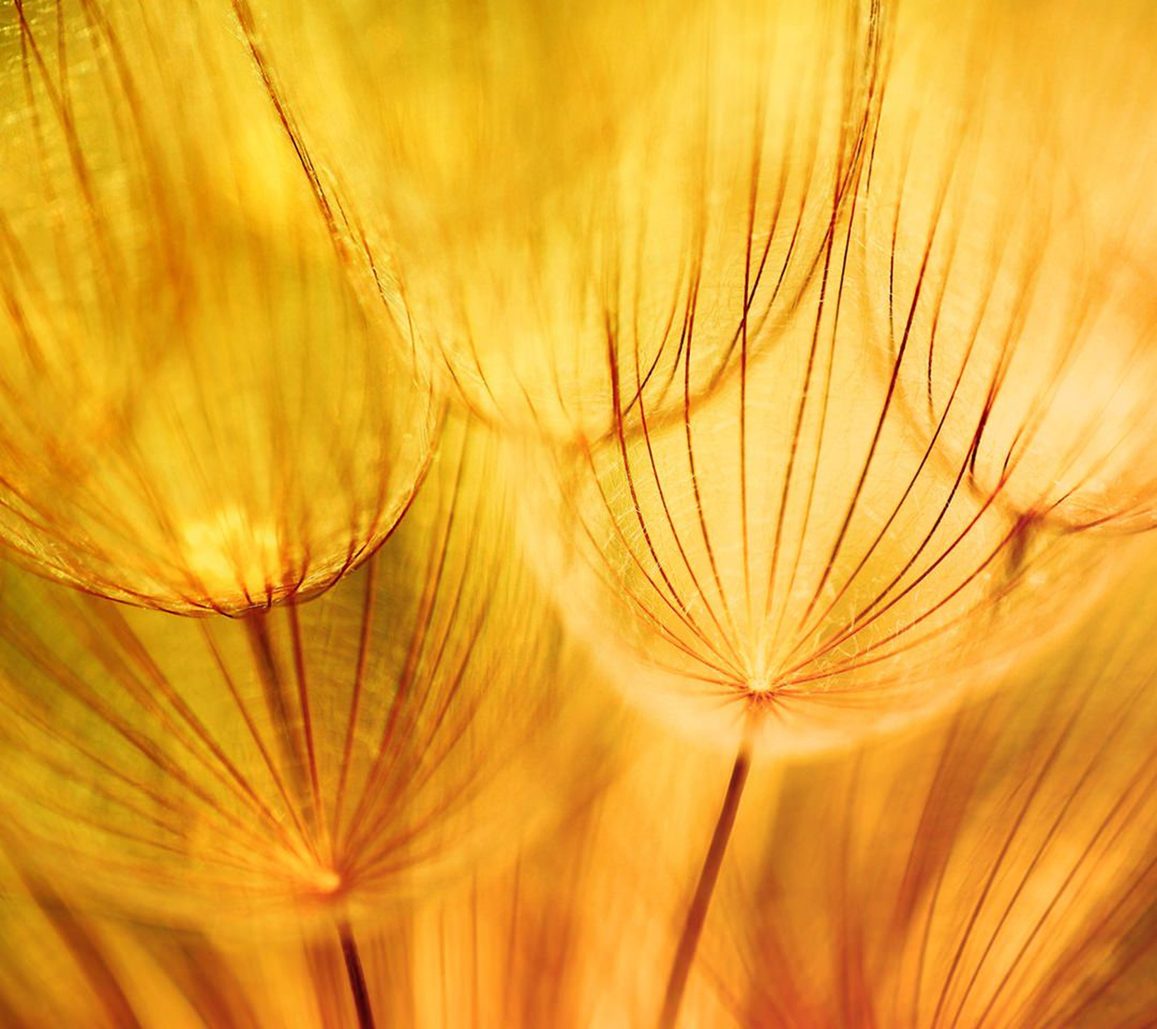 close-up, fragility, full frame, growth, nature, selective focus, backgrounds, beauty in nature, freshness, focus on foreground, plant, orange color, flower, detail, no people, macro, stem, natural pattern, outdoors, yellow