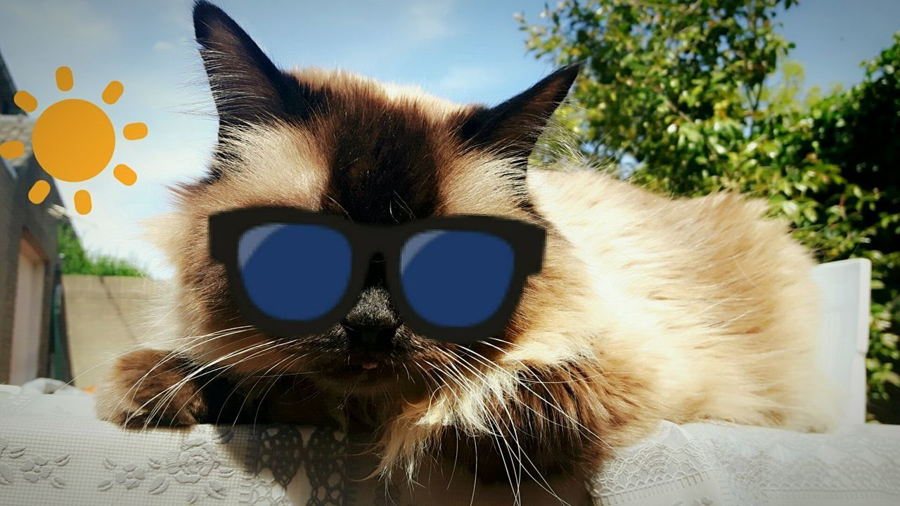 Close-up No People Indoors  Day Nature Traveling Sun Creativity Photography Discovering Live For The Story Freshness Travel Destinations Photograph Cat Cat Lovers Cats Of EyeEm Cats Sunglasses Snapchat Luxury Healthy Lifestyle Fun Funny
