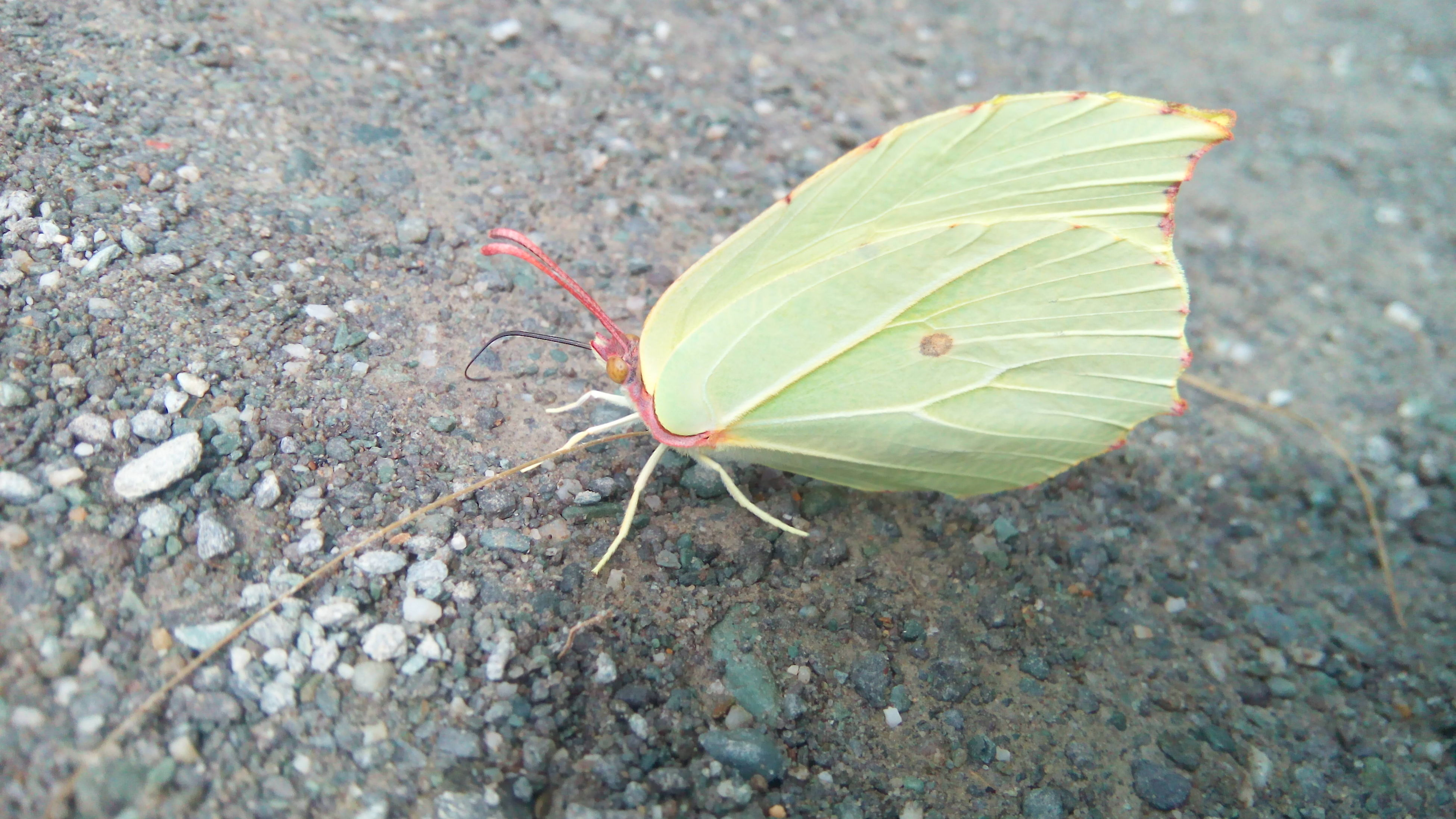 leaf, insect, nature, close-up, animal themes, one animal, no people, plant, outdoors, animals in the wild, day, beauty in nature