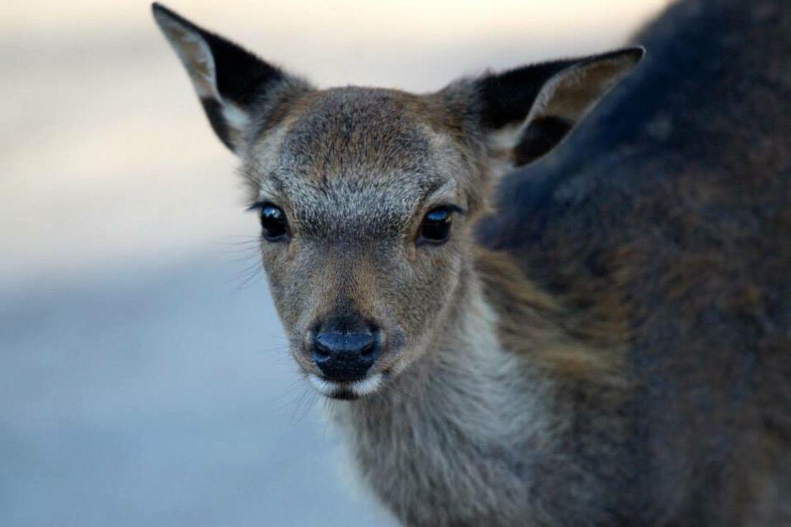 Deer Eyemnaturelover Nature