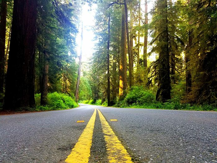 Explore California Glorious NorCal Redwood Highway Vacation State Of Mind Do You Travel Travel Destinations Discovery Go Places Perspectives On Nature