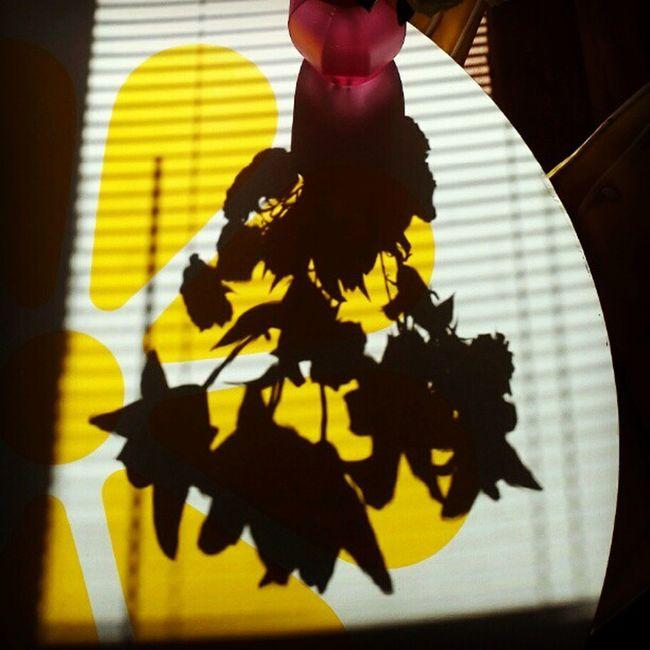 Shadow Flowers Light