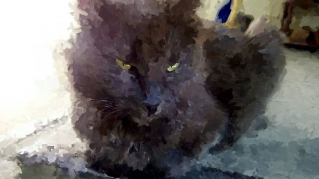 Cat Cat Grey Grey Cat Photo Photoart Oil Painting Empress Relaxing Relax