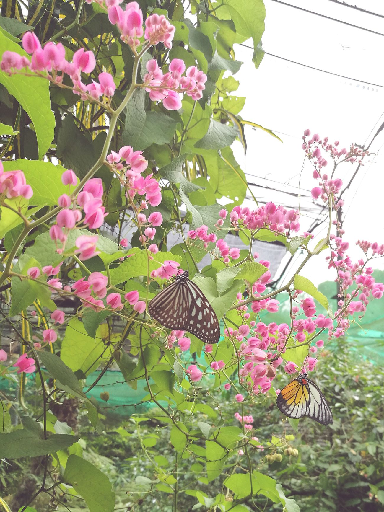 Distance in nature Butterfly Nature Plant Kuala Lumpur Malaysia  Butterflypark Photooftheday Beauty In Nature