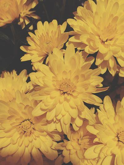Flowers Flowers 🌸🌸🌸 Close-up Flowers In Bloom Crysanthemum Yellow Yellow Flowers