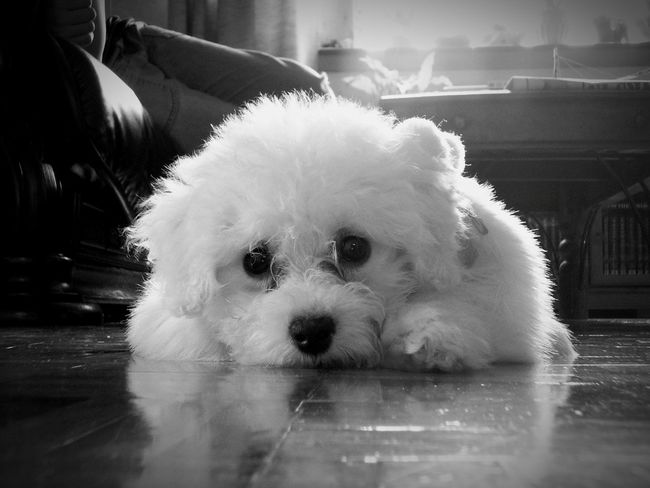 Sumsung SGH-G800 Camera Phone Puppy Black And White