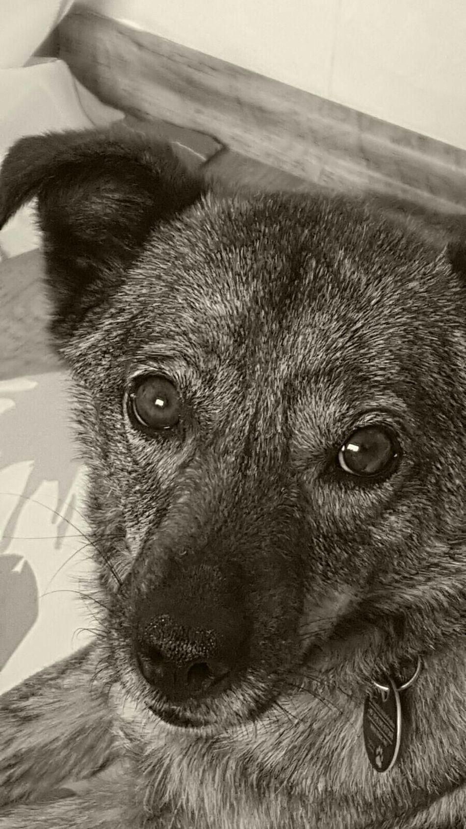 Taking Photos Dogs Of EyeEm DogLove Dog❤ Enjoying Life Dogportrait Dogfofo Dogphotography Eye4photography  Lovelydog  April 2016 Braunschweig
