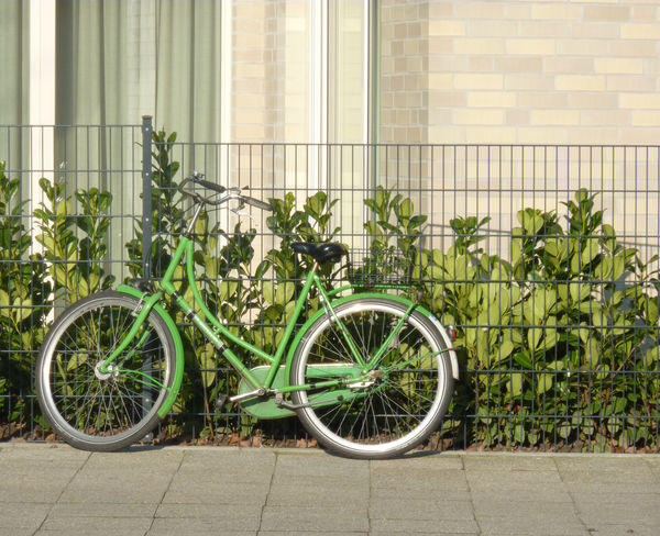 Bicycle No People Land Vehicle Transportation Stationary Green Color Mode Of Transport Day Plant Indoors  Architecture Bicycle Rack Green Green Green Green!  Green Color Bike