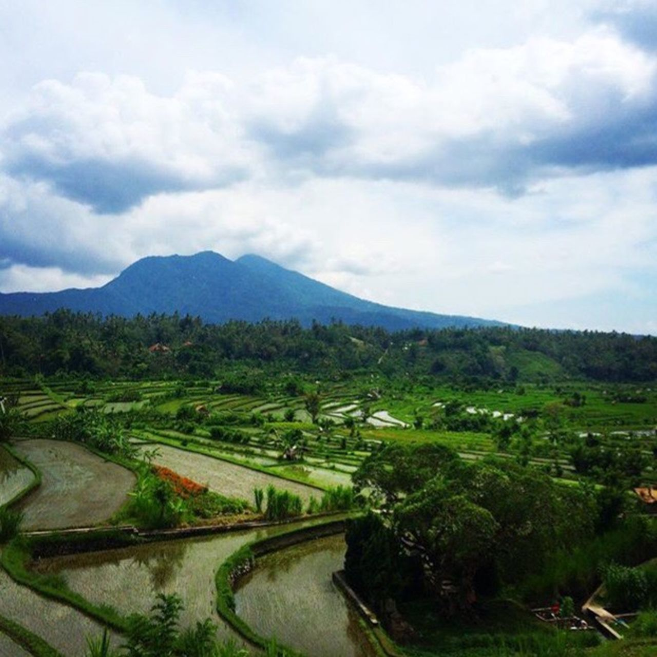 Rice Paddies and Volcanos🌋 Landscape Road Tranquil Scene Transportation Sky Scenics Tranquility Non-urban Scene Cloud - Sky Cloud Mountain Beauty In Nature Travel Destinations Day Nature Countryside Outdoors Tourism Majestic Growth Bali Tulamben