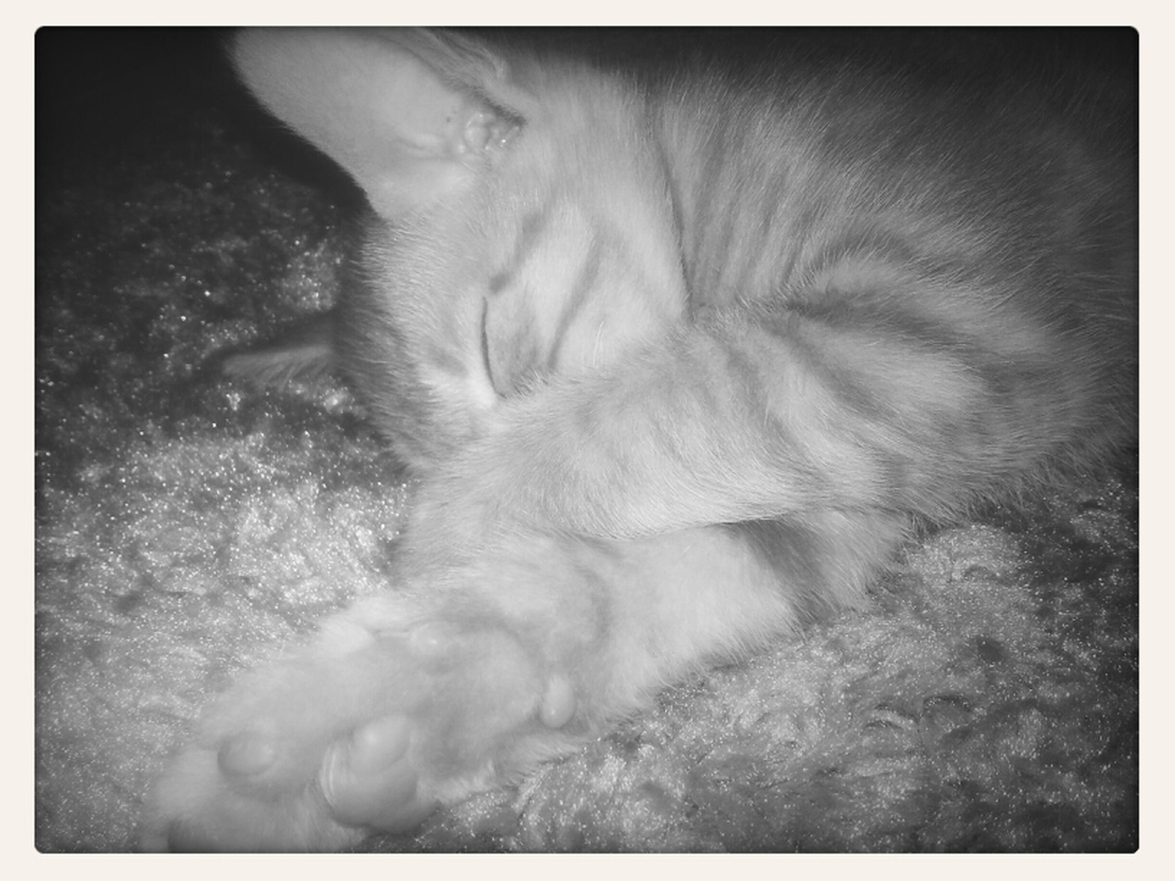 transfer print, auto post production filter, close-up, sleeping, high angle view, one animal, pets, domestic cat, relaxation, part of, domestic animals, animal themes, one person, nature, indoors, day, mammal, cat