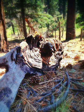 In The Forest Deadwood  EyeEm Best EyeEm Best Shots - Trees