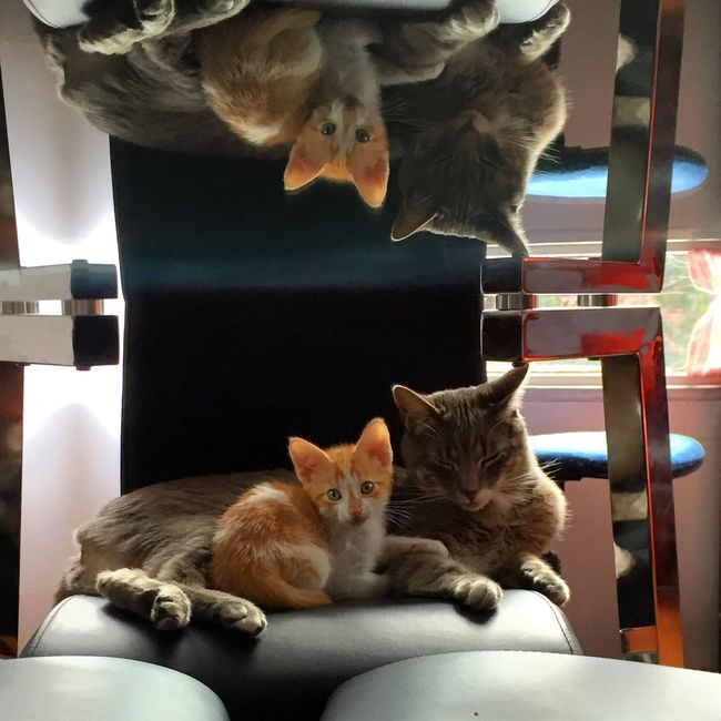 My pets! Cute..❤️ Cats Happiness Amor Relaxing Enjoying Life Good Morning World! Cheese! No Edit/no Filter EyeEmBestPics EyeEm Best Shots