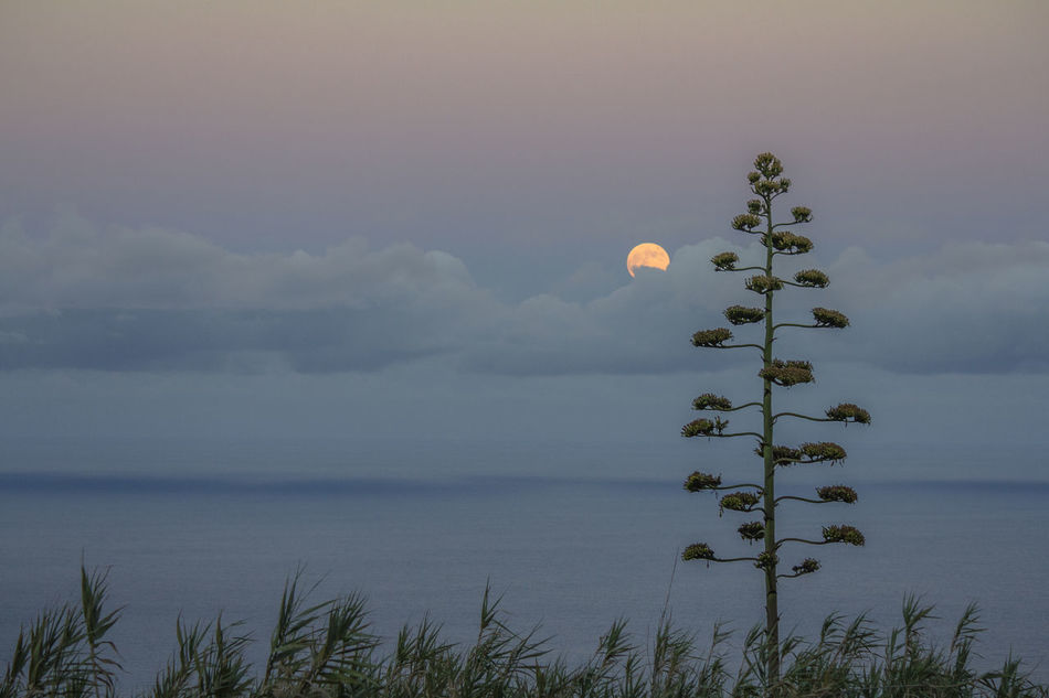 Beautiful stock photos of mond, Calm, Horizontal Image, beauty in nature, clear sky