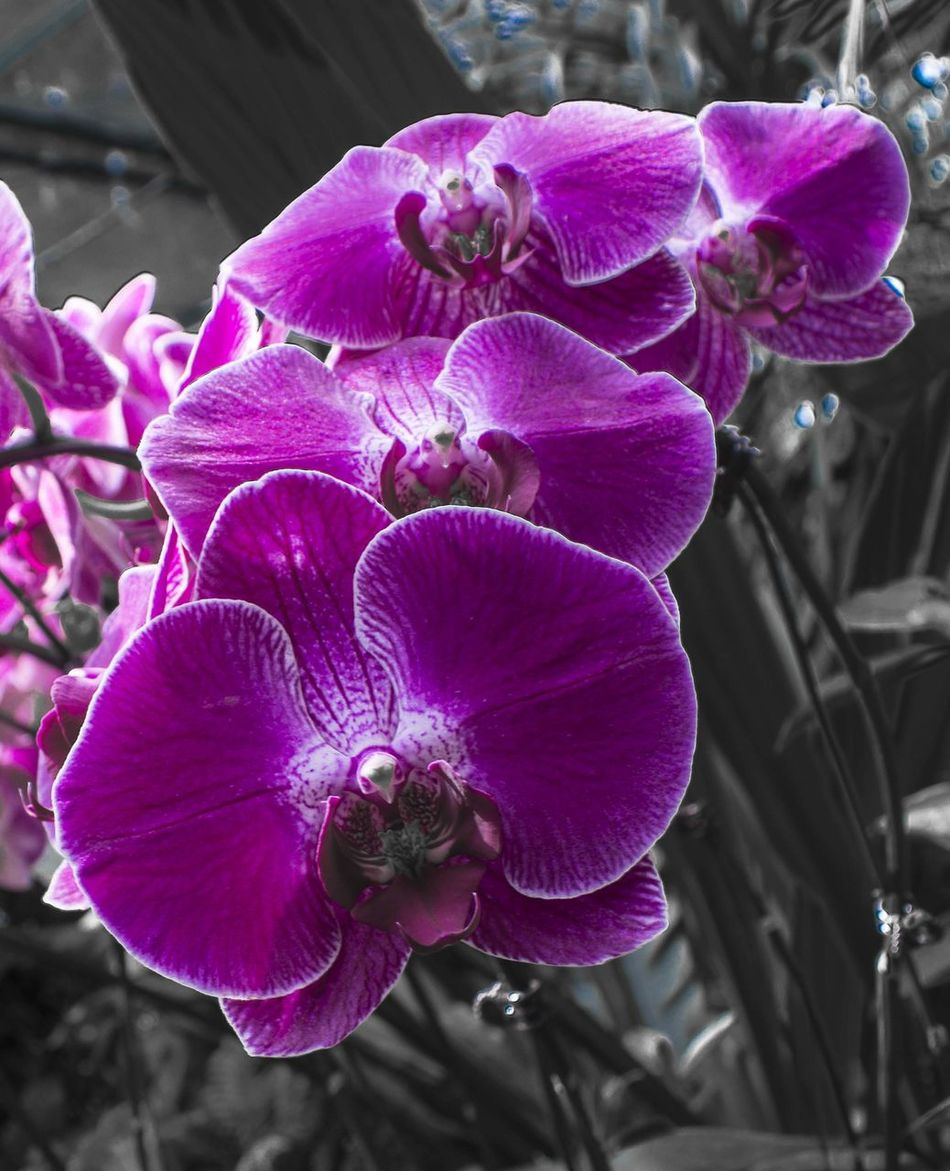 Flower Nature Petal Fragility Plant Purple Beauty In Nature Flower Head Freshness Growth Outdoors EyeEm Nature Lover Orchid Blossom Beauty ForAHOK Jakarta Governor Orchid Blossoms From My Point Of View Beauty In Nature Freshness Growth Plant