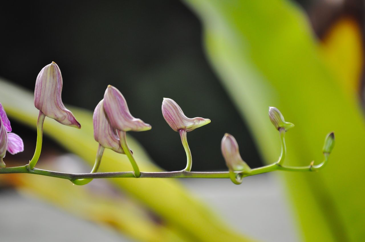 Orchid Orchids Orchid Flower Orchid Blossoms Orchids Collection Flower Growth Budding Budding Flower Freshness Nature Fragility Beauty In Nature Close-up Plant No People Petal Flower Head Blooming New Life Beauty In Nature
