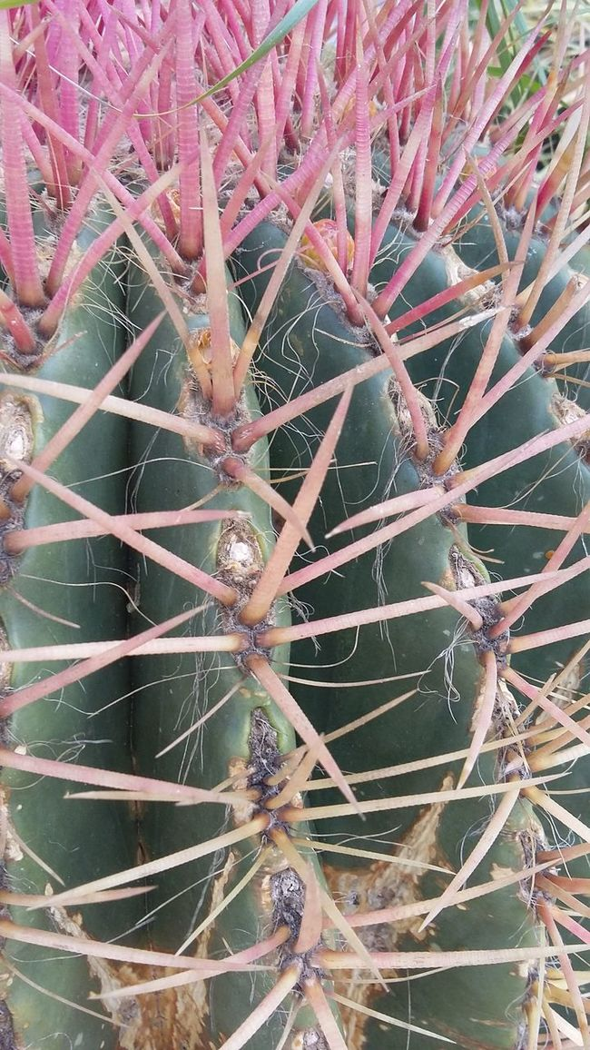 Natural Beauty Cactuslover Pink In Nature Plants 🌱 Taking Photos Check This Out Eyem Best Shots Eyem Best Edits