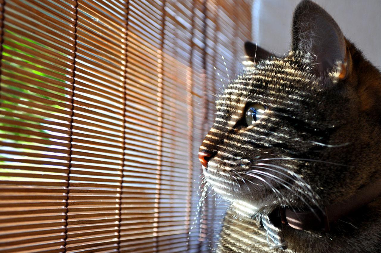 Close-Up Of Cute Tabby Cat