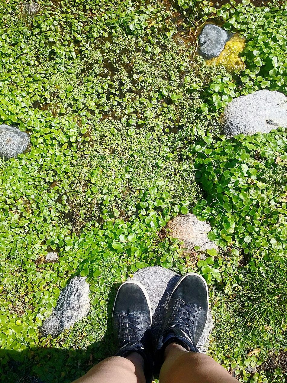 Shoe Green Color Lifestyles Followforfollow Tranquility Nature GoodDay❤ Followme Hi! Follow Me :) Like4likes Peace And Tranquility No People Relaxing Mountain Camping Reflection Follow4follow Vacations Goodmorning :) Hola! Followback Edition Seguime Y Te Sigo Beauty In Nature