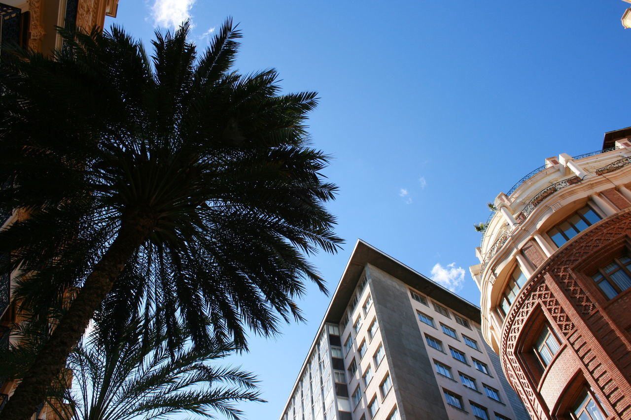 architecture, low angle view, building exterior, built structure, outdoors, day, no people, tree, sky, palm tree