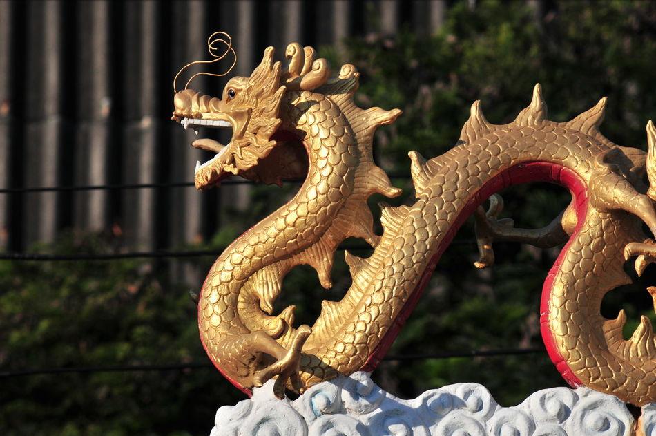 Beautiful stock photos of dragon, Art And Craft, Day, Dragon, Fictional Character