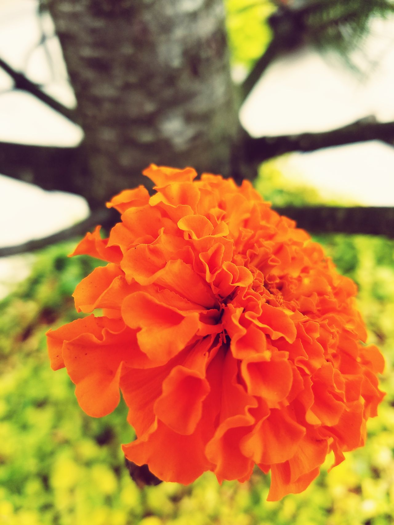 A beautiful flower Flower Close-up Orange Color Beauty In Nature Flower Head Focus On Foreground Vibrant Color Day In Bloom Outdoors No People
