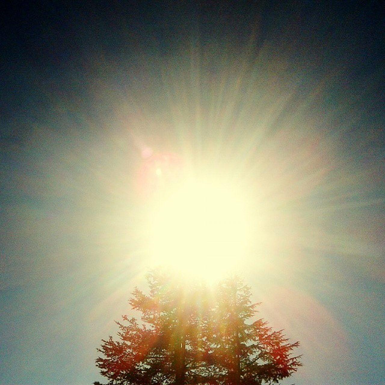 Huggingatree  Treeandsky Fortheloveoftree Treeandsun Sunshine Lookupandthrive EyeEm Eyeemfilter Frommypointofview 🌲👌