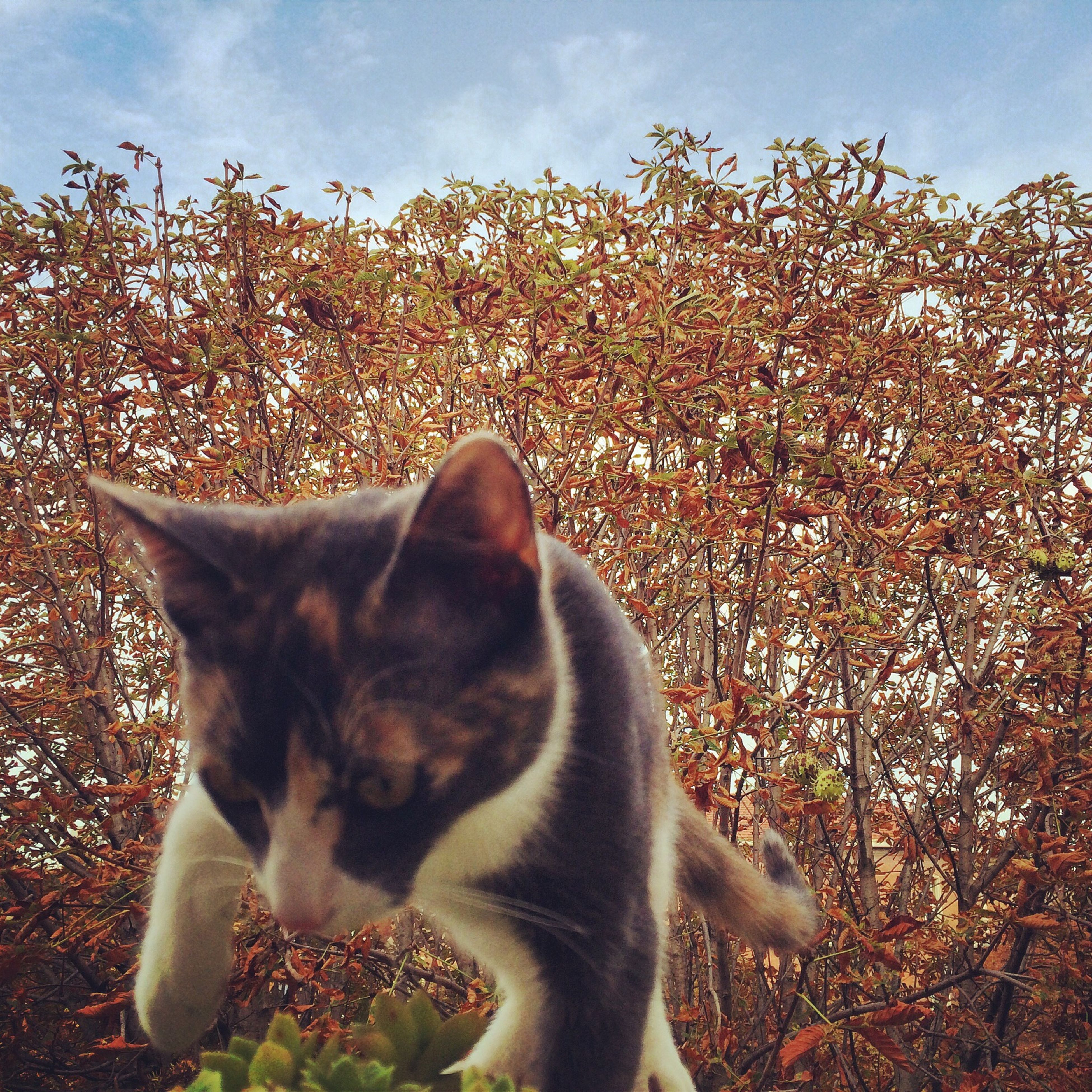 pets, animal themes, one animal, domestic animals, mammal, domestic cat, cat, feline, sky, tree, flower, nature, whisker, relaxation, day, sitting, growth, looking away, plant, outdoors