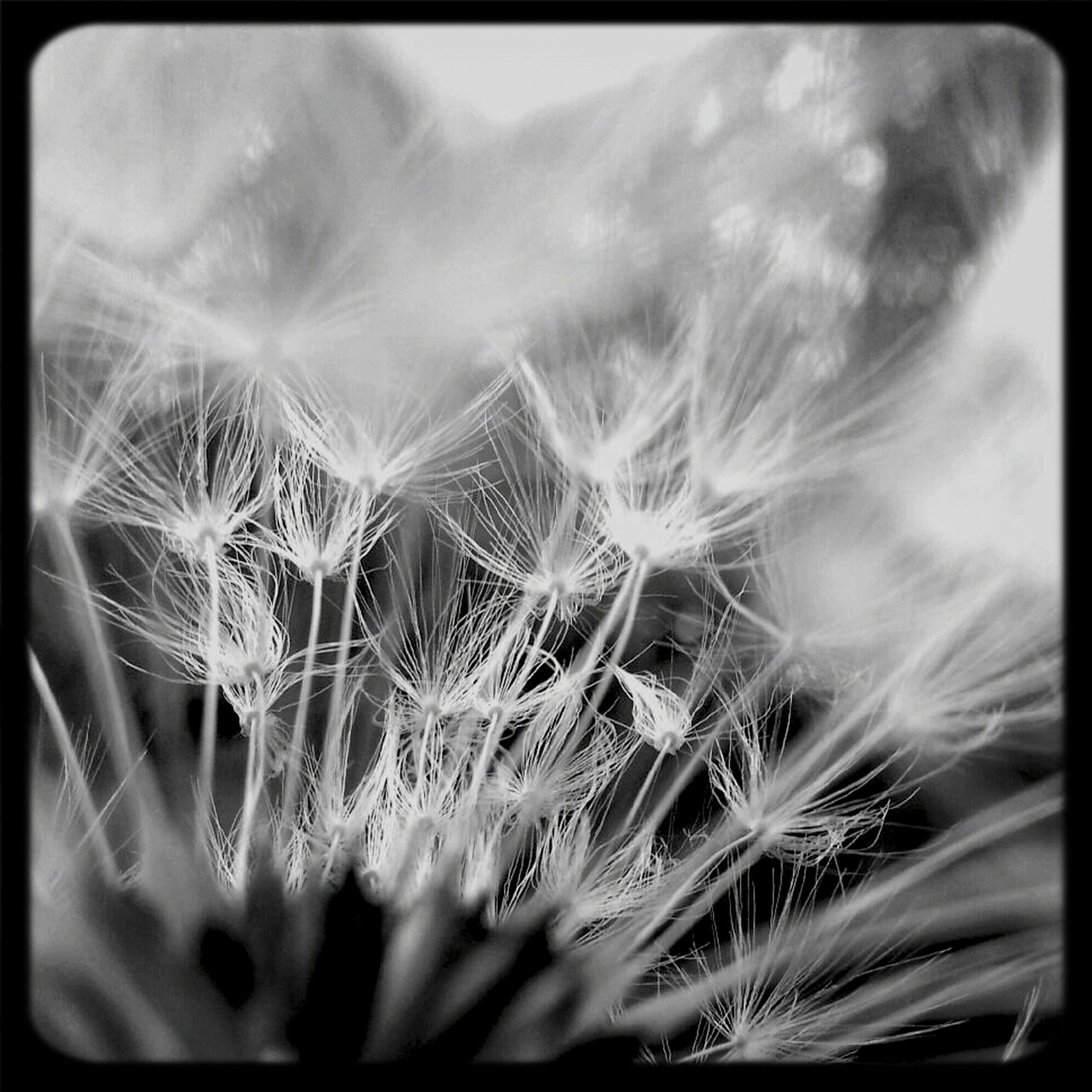 flower, growth, dandelion, close-up, freshness, fragility, auto post production filter, nature, flower head, plant, selective focus, beauty in nature, transfer print, softness, focus on foreground, day, no people, single flower, outdoors, stem