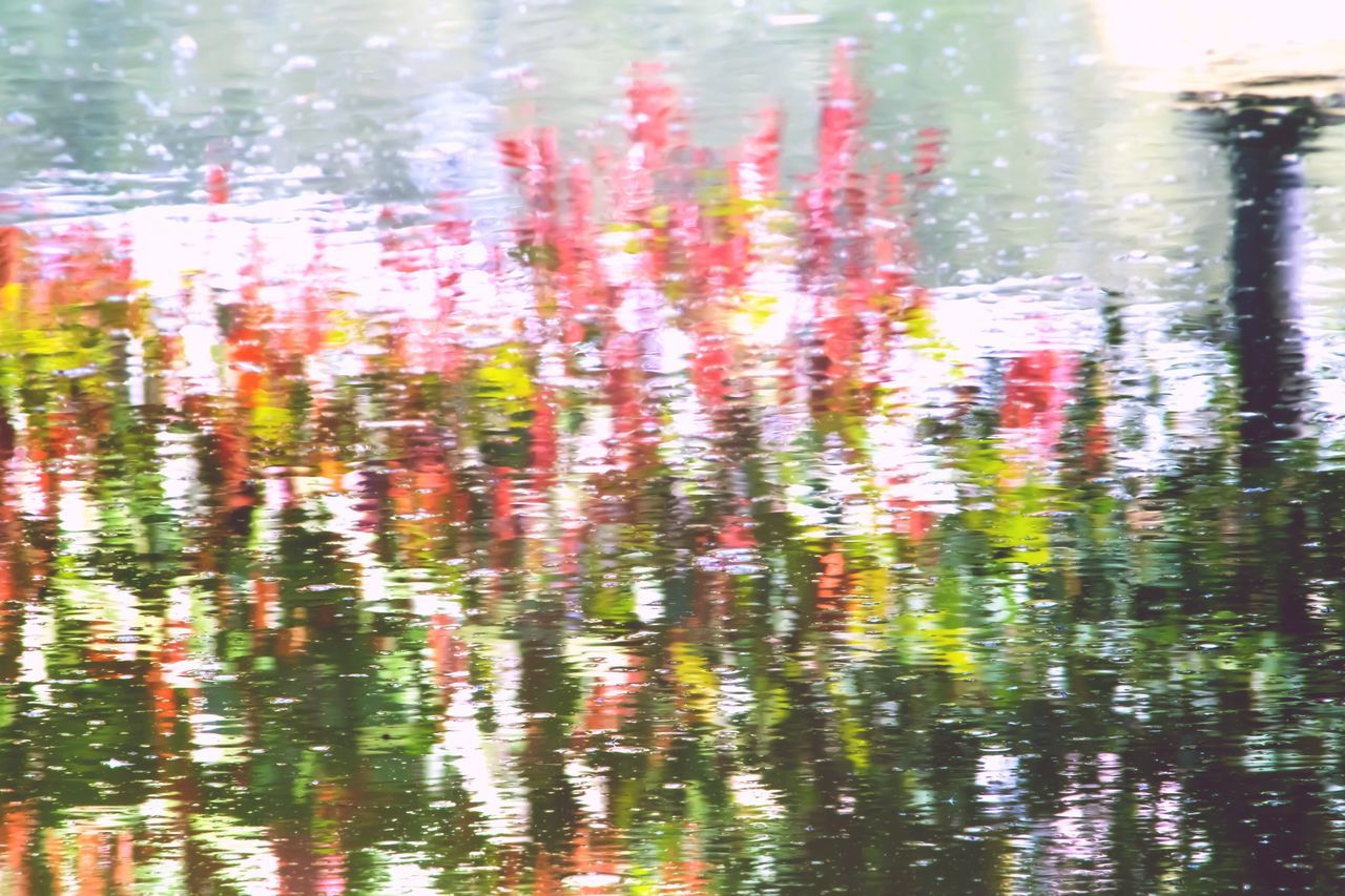 Reflection Water Impressionism Hedge Pink Leaves Red Leaves Green Leaves Pink Color Pink Flower Millennial Pink Paint Painting Millennial Pink