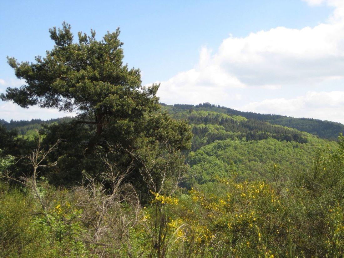 Relaxing Eifellandschaft bei Wanderath