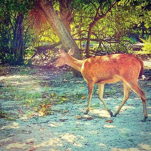 Go home, deer.. Baluran Balurannationalpark Wildlife Animal deer jawatimur java indonesia travel