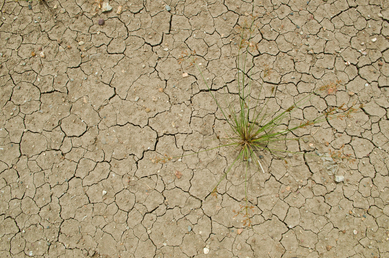 Pattern of cracked and dried soil and weed Abstract Backgrounds Cracked Day Dehydration Environmental Issues Fragility Full Frame Ground Nature No People Outdoors Parched Pattern Soil On The Ground Textured  Weeds