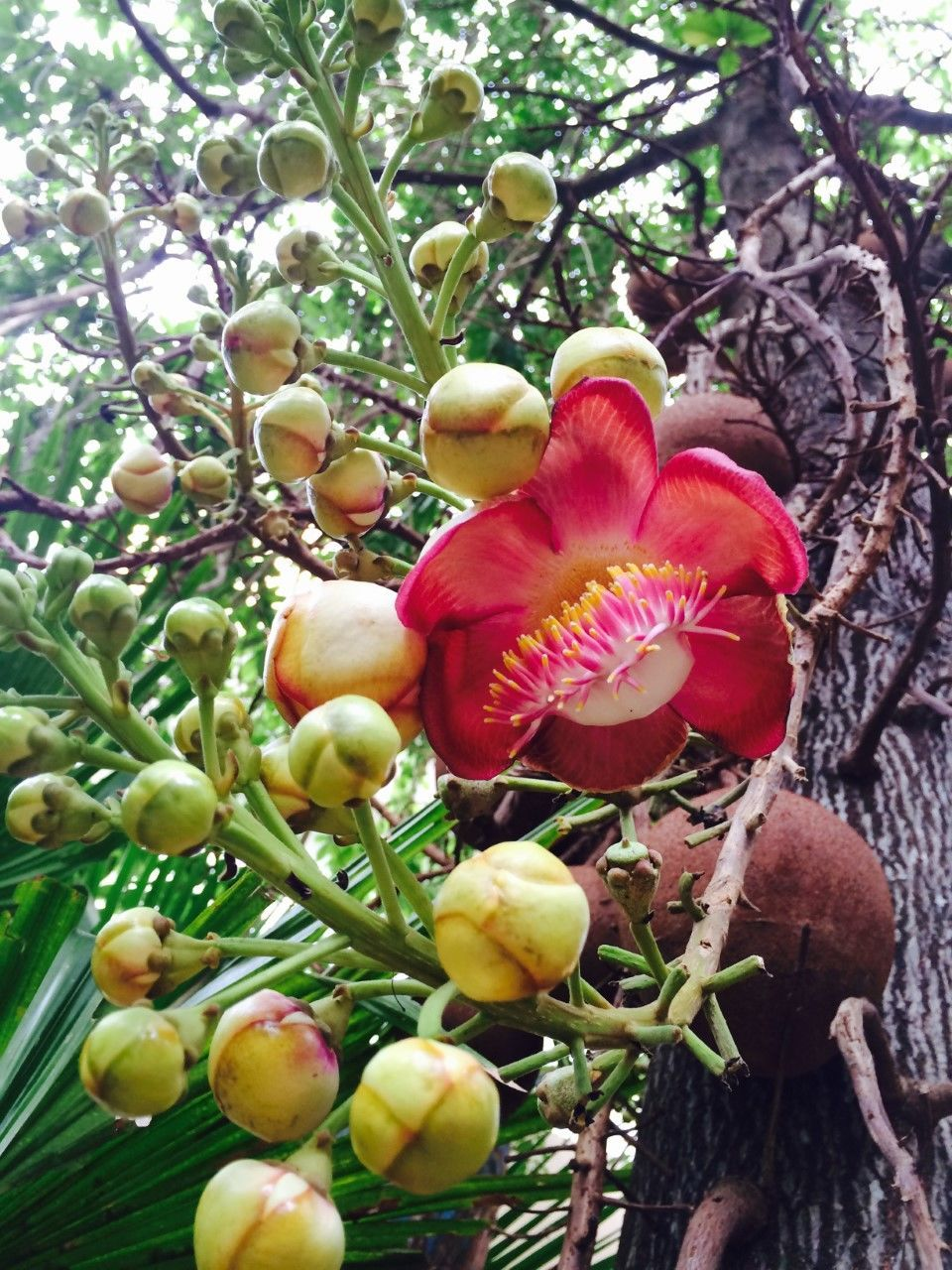 growth, tree, nature, beauty in nature, fruit, no people, plant, day, outdoors, branch, freshness, flower, close-up