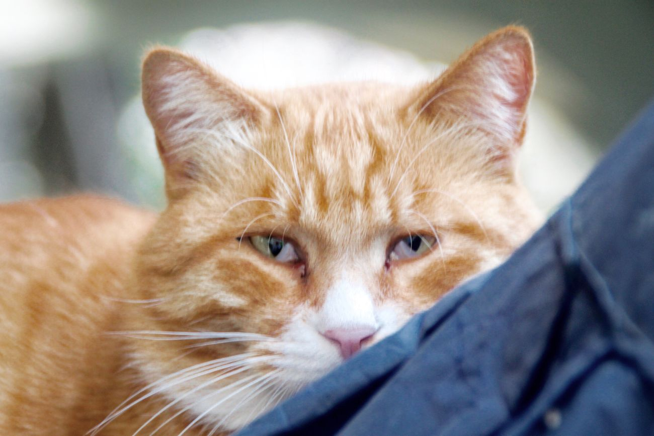 Mammal Animal Themes One Animal Cat Close-up Homeless Cats