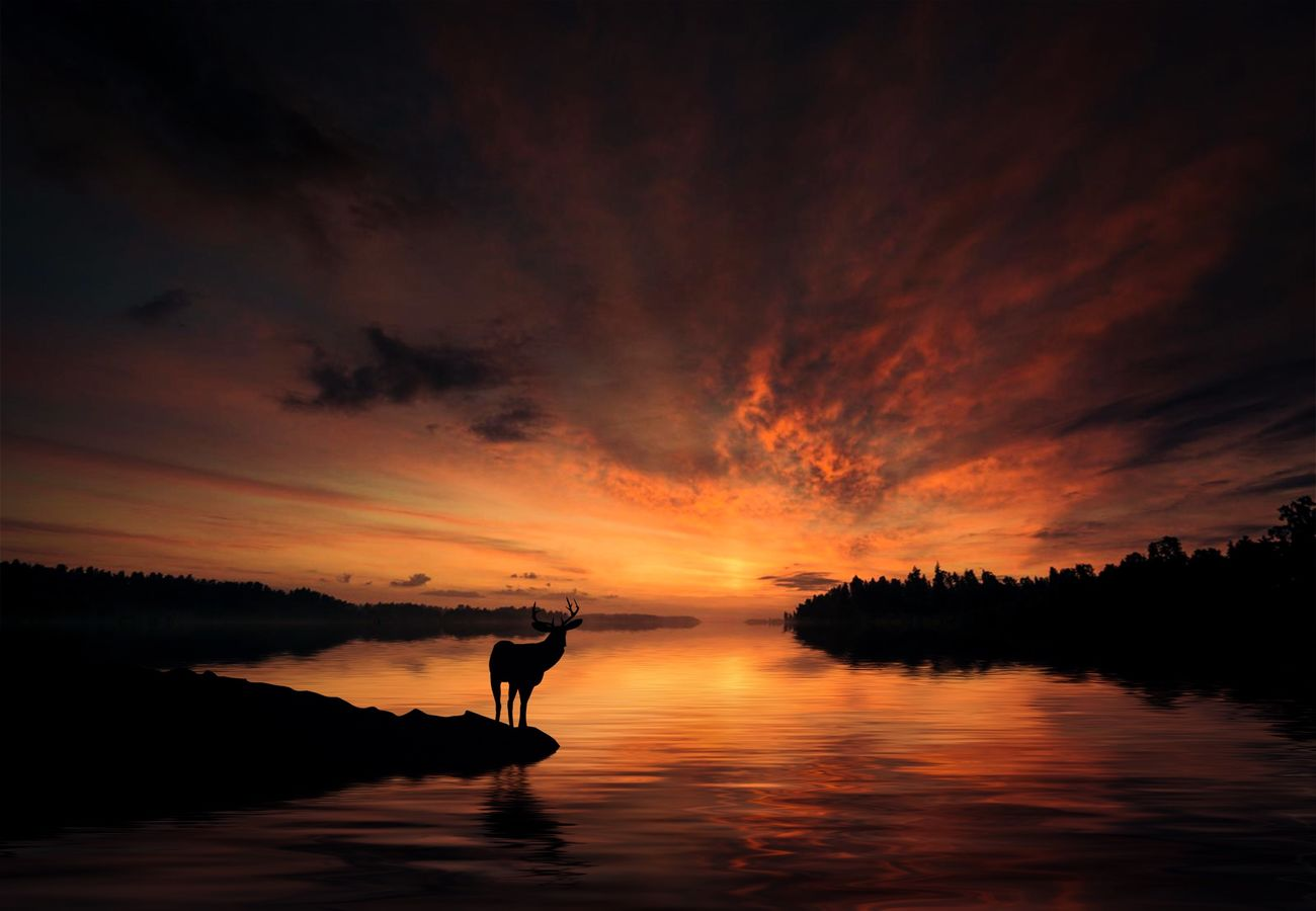 Beautiful stock photos of deer, Animal Themes, Animal Wildlife, Animals In The Wild, Beauty In Nature