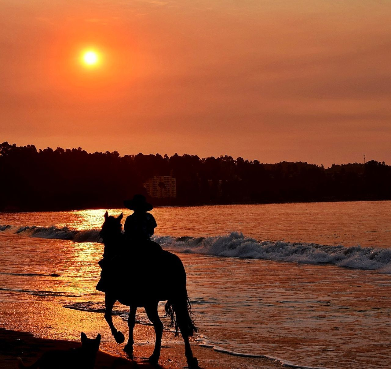 Sunset Horse Silhouette Nature Outdoors Beach Beachphotography Beachlovers Beach Walk Sunsets Sunset_captures Sunsetlover Sunset Silhouette Landscape Landscape_Collection Landscape_photography First Eyeem Photo