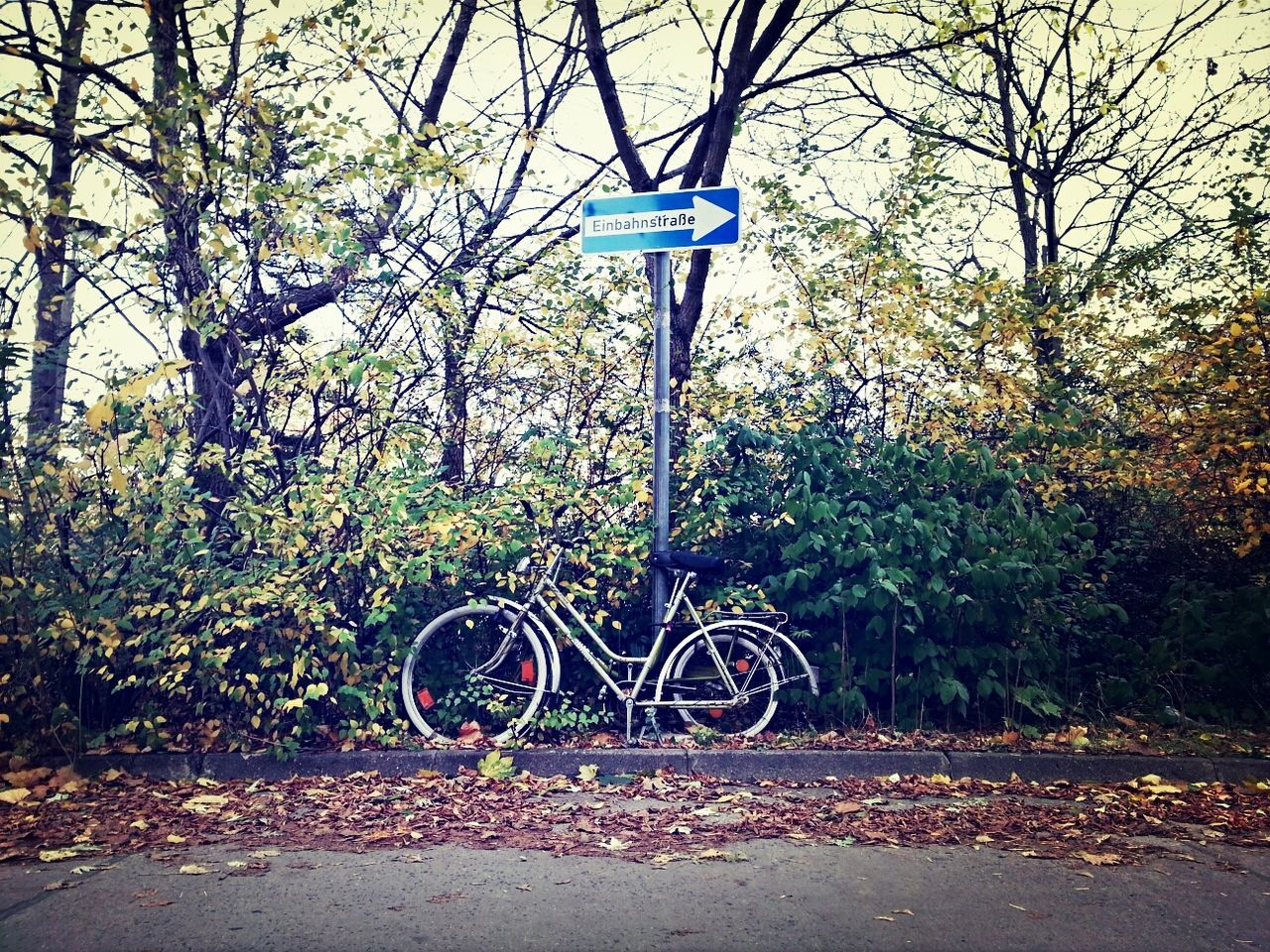 Bicycle parked against plants and arrow sign