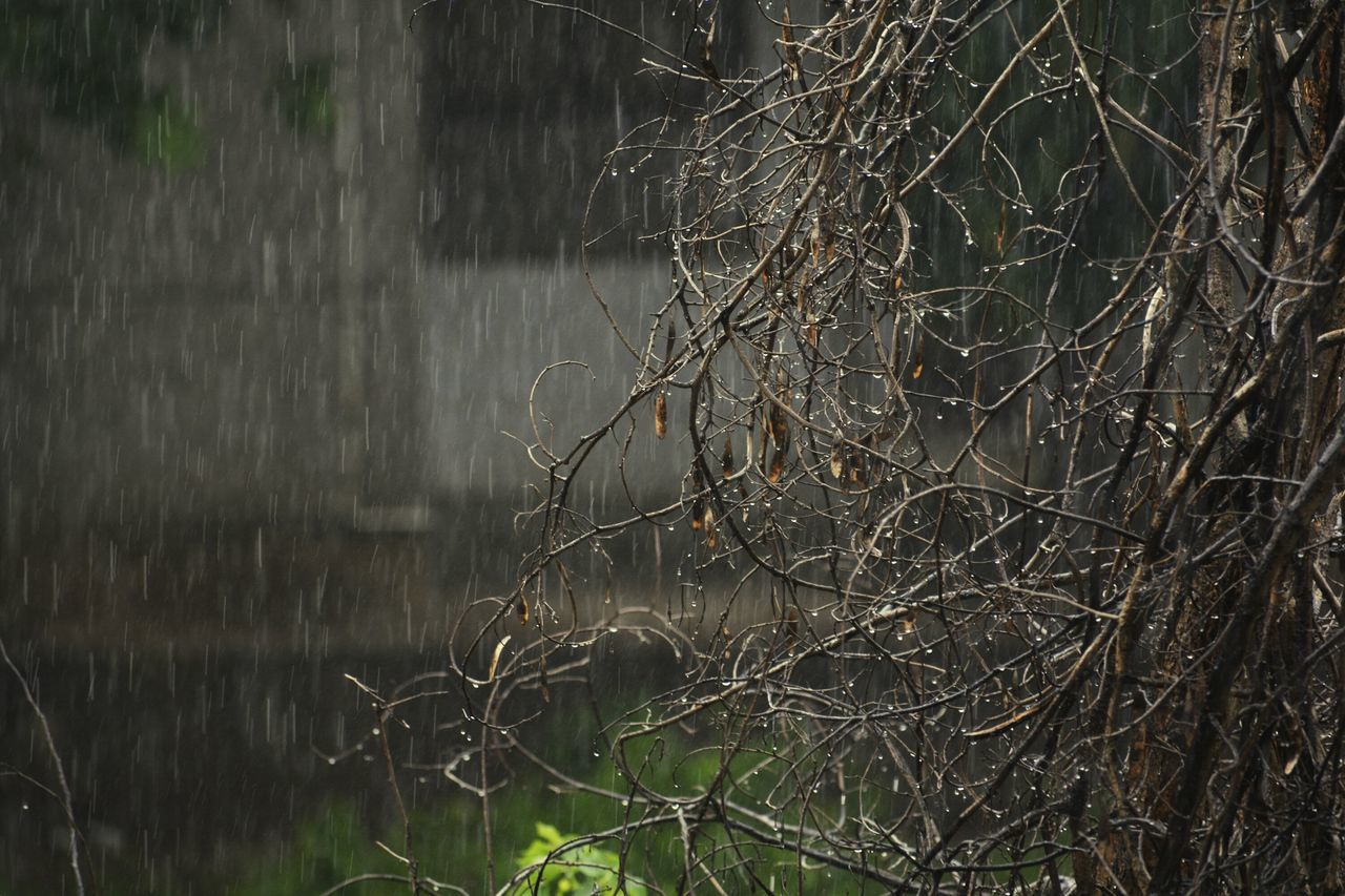 Eyeemphoto IT Was Raining Outside Heavily Yesterday Only For A Short Time Tried to capture Rain ForTheFirstTime Using Nikon Newdelhi India Open Edit Dry Leaves Dyingtree