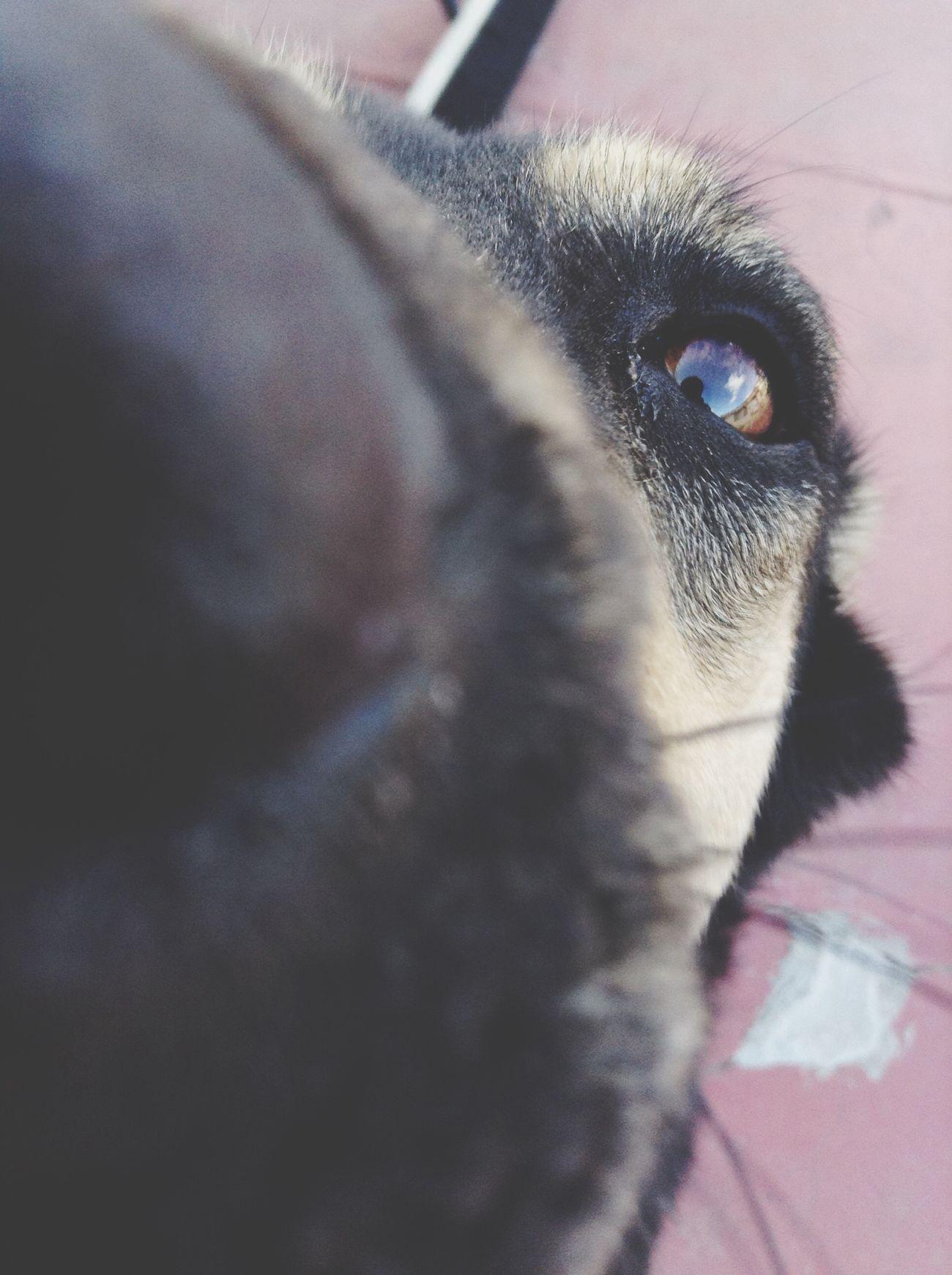 First Eyeem Photo Perro Dog Tijuana Tengo Hambre