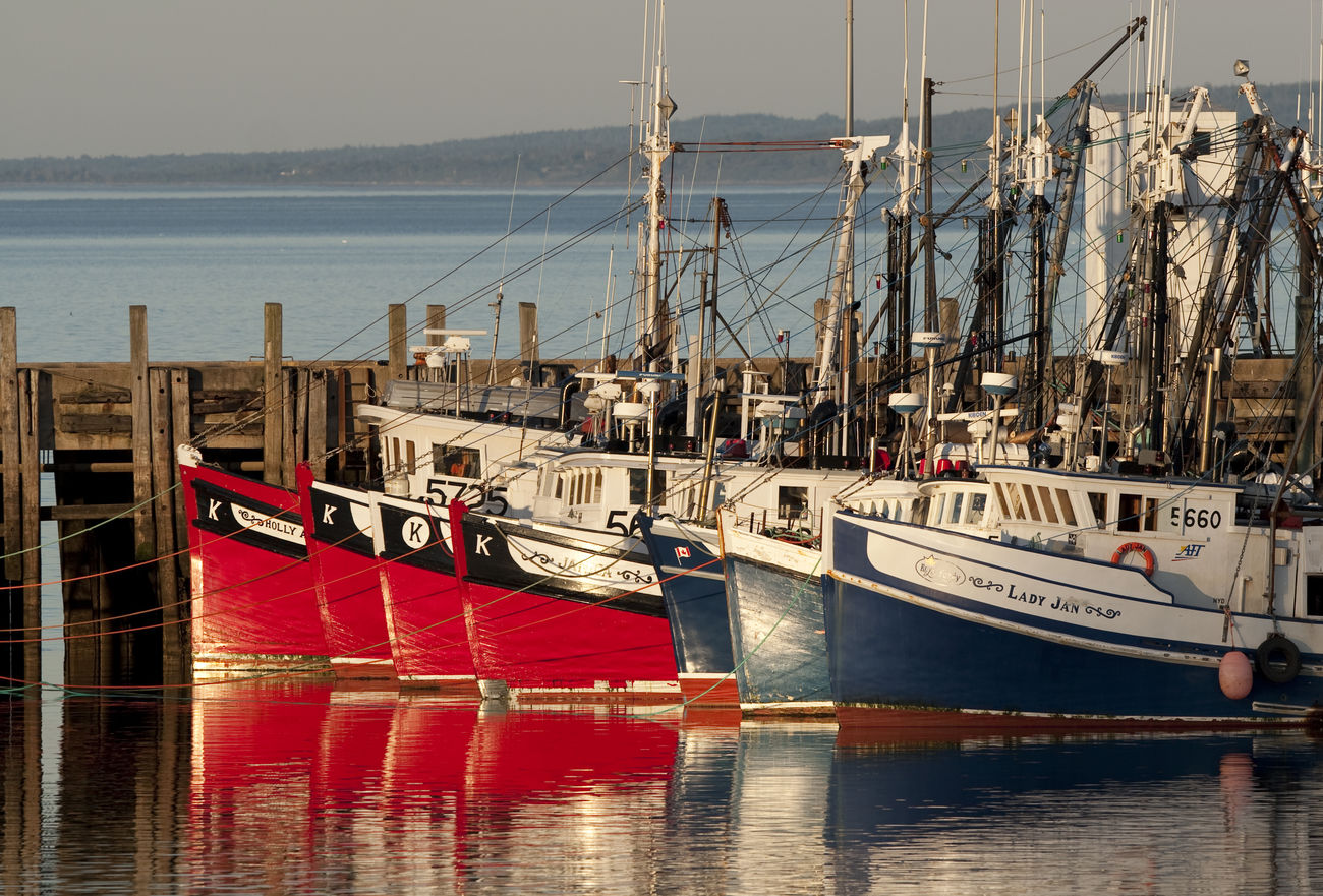 Boats of the fishermen in Digby, Bay of Fundy, Nova Scotia Day Harbor Mast Mode Of Transport Moored Nautical Vessel No People Outdoors Sailboat Sailing Ship Sea Sky Tall Ship Transportation Travel Destinations Water
