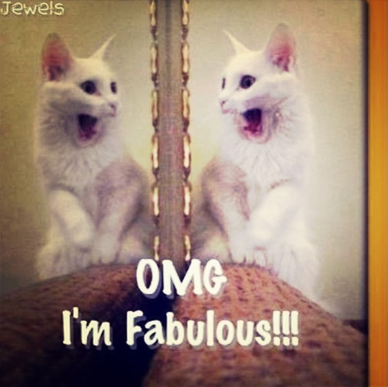 Fabulous Lol