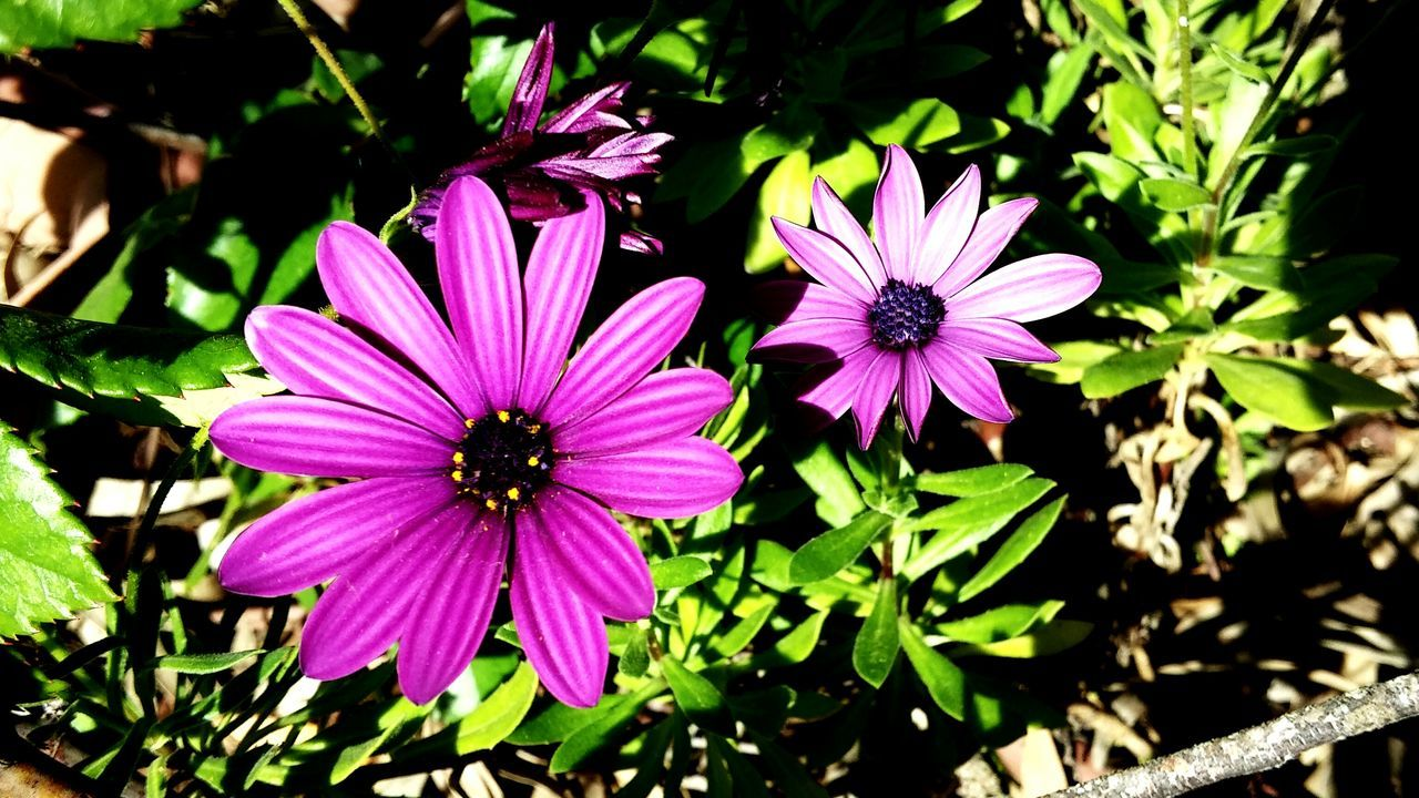 Flower Nature Day Plant Outdoors Purple Growth Petal Beauty In Nature Flower Head No People Freshness Primavera Naturaleza Flores Cáceres (Spain) Beauty In Nature Nature