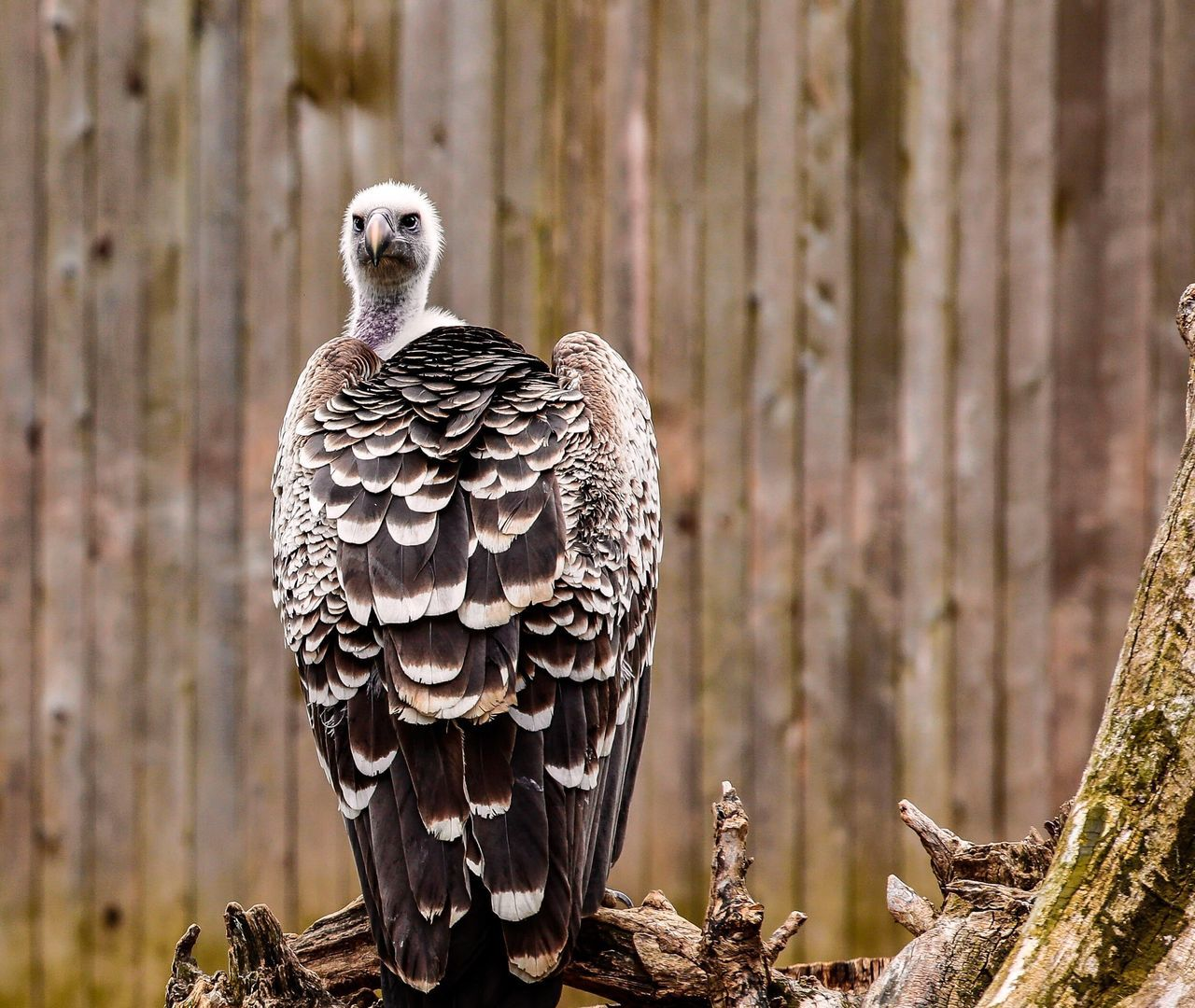 Focus On Foreground Animals In The Wild Animal Wildlife Bird No People Animal Themes Nature Outdoors Day One Animal Bird Of Prey Perching Close-up Beauty In Nature JGLowe Curiosity Stink Eye