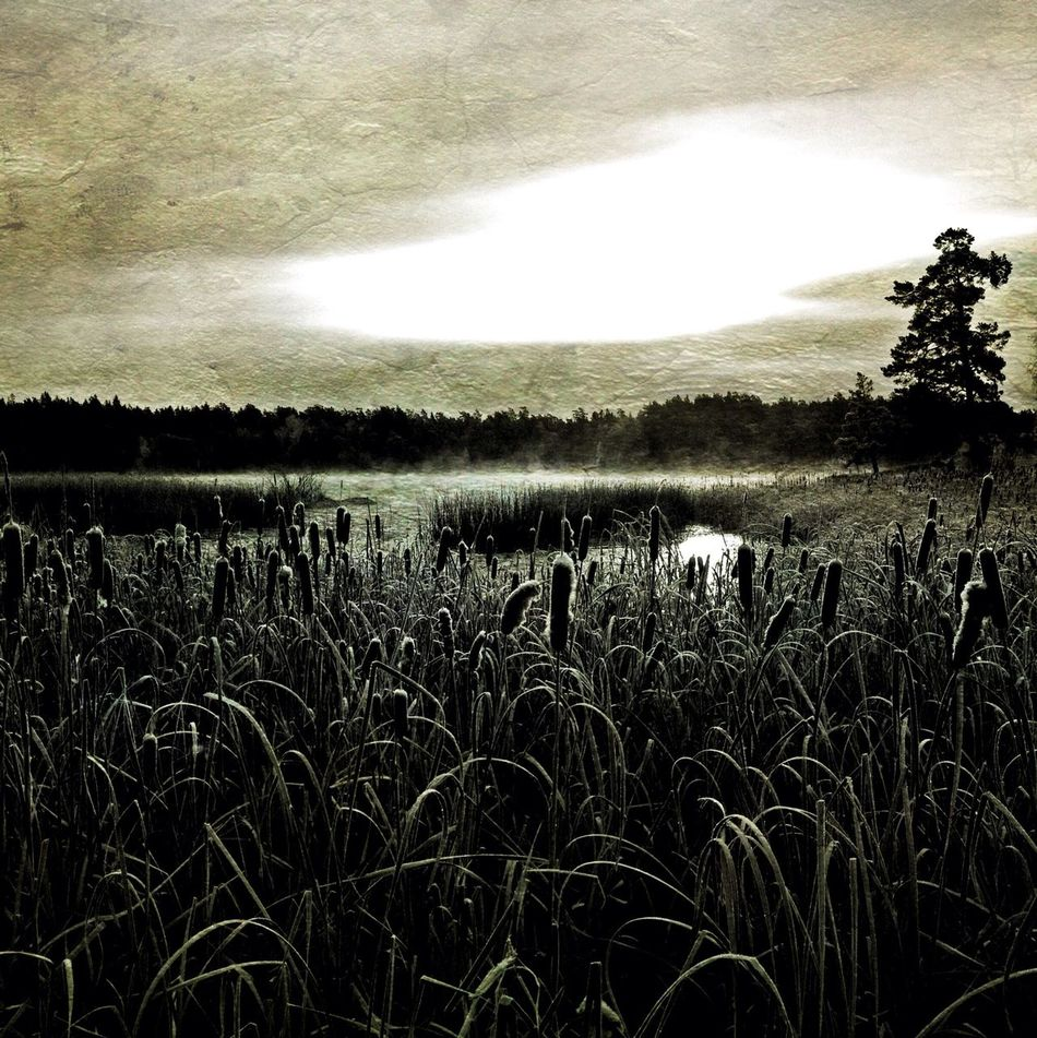 The lake Kvarnsjön in Gustavsberg, Sweden Nature Blackandwhite Shootermag AMPt_community