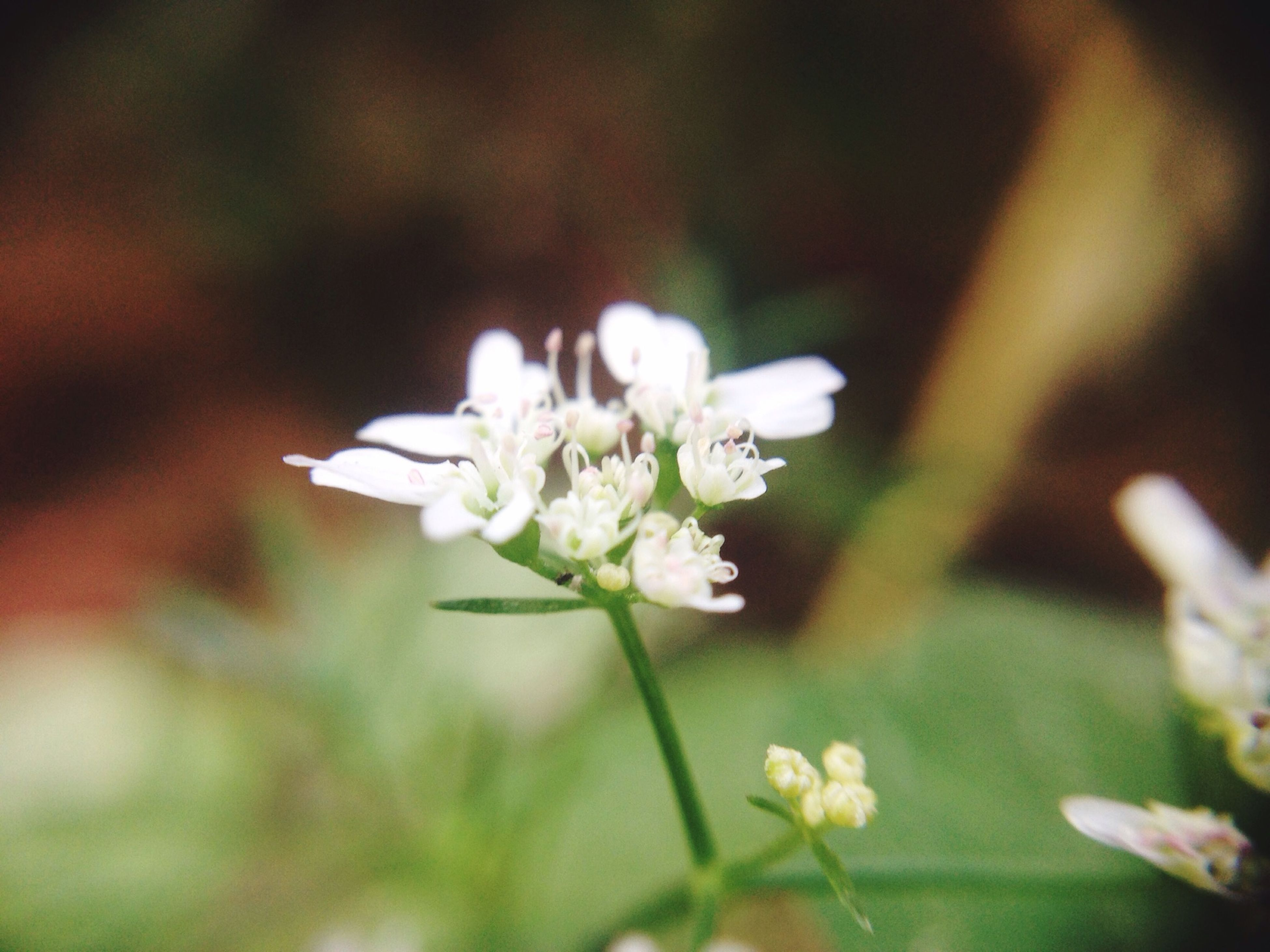 flower, freshness, fragility, petal, white color, growth, flower head, beauty in nature, focus on foreground, close-up, blooming, nature, plant, selective focus, stem, in bloom, blossom, white, stamen, pollen