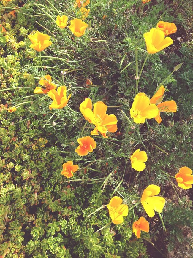 Flowers Flower Orange Naturelovers Gardem Green Green Green!  Flores Jardim Potography Eye4photography  Natureza 🐦🌳 🌺🌺🌺