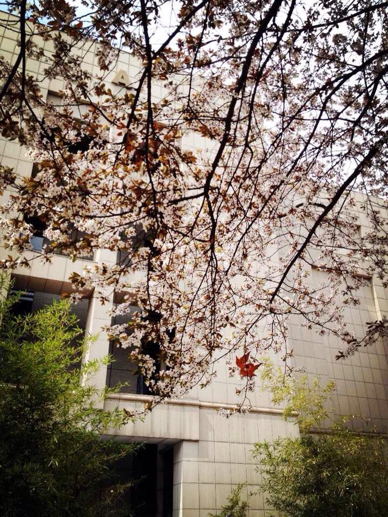 Spring (ॢ˘⌣˘ ॢ⑅)