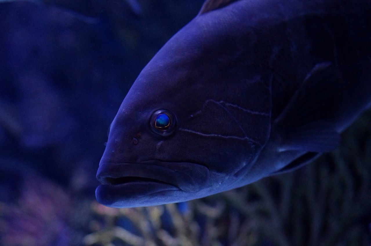 Fish Aquarium Water