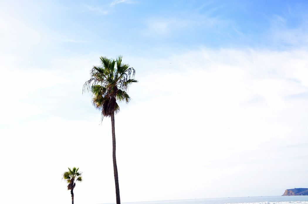 Beach Beauty In Nature By The Ocean California Beach Cloud - Sky Cloudy Day Copy Space Growth Low Angle View Nature Outdoors Palm Tree Silhouette Sky Tranquility Tree